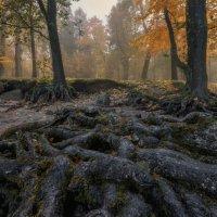В сказочном тумане :: Владимир Колесников
