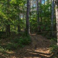 В крымском лесу :: Игорь Кузьмин