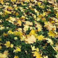 Осенний ковёр :: Надежда