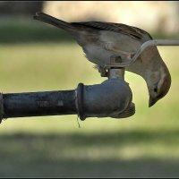 Если в кране нет воды .... :: Leonid Korenfeld