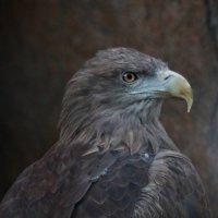 Птичка :: Владимир Плужников