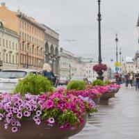 Санкт-Петербург :: Кадыр Чожобеков