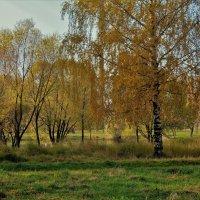 Отшумела роща Золотая... :: Sergey Gordoff
