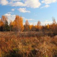 Золотая осень :: Надежда Постникова