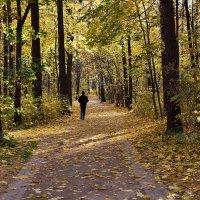 Осенний пейзаж :: dindin