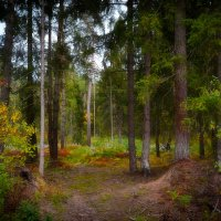 В осеннем лесу :: Алексей (GraAl)