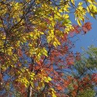многоцветье октября :: tgtyjdrf