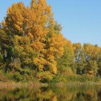 Осень... краски, утки, река, отражения :: Тамара Бедай
