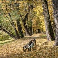 Золотая осень :: Валерий Пегушев