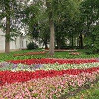Цветы в парке. :: Валентина Жукова