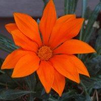 Яркий октябрь... :: Тамара (st.tamara)
