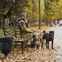 Осень, улица, скамейка, две собаки... :: Тата Казакова