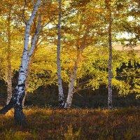 Осень  пишет  свой  портрет :: Геннадий Супрун