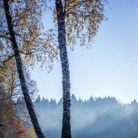 Утренний туман. :: Виталий Бененко