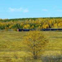 Поезд в осень. :: Анатолий