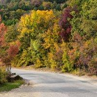 Как много красок у Осени... :: Ольга Голубева