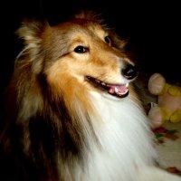 Собак-улыбак :: Евгения Х