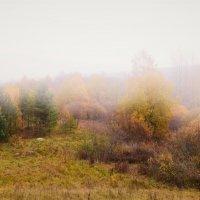 Туман... :: Татьяна Глинская