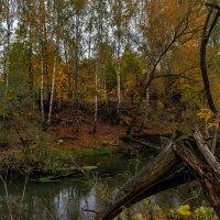 осенний пейзаж у реки :: Владимир Ефимов