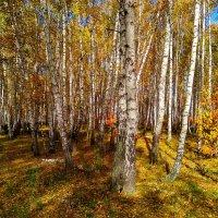 Осенний лес ... :: Татьяна Котельникова