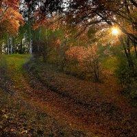 Осень :: Любовь