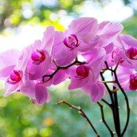 Орхидейное... :: Любовь С.