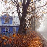 Осенние контрасты :: Наталья Ерёменко