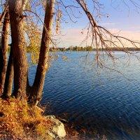 В объятьях озера стареют тополя... :: Нэля Лысенко
