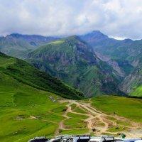 Альпийские луга Грузии :: Вячеслав Случившийся