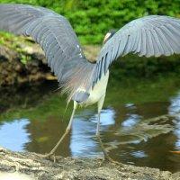 Расправим крылья. :: оля san-alondra
