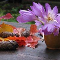 Цветы осенние... :: ТАТЬЯНА (tatik)
