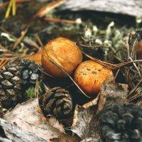 Лесные красавцы :: Виктория Браун