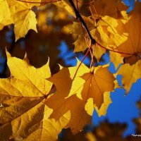 Осень шумит листопадом и плачет дождём... :: Татьянка *