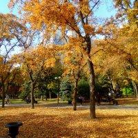 Золотая осень в Покровском сквере... :: Тамара (st.tamara)