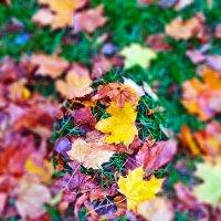 Осенние листья ... :: Татьяна Котельникова