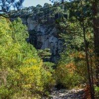 Деревья  и скалы :: Варвара