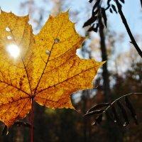 осень :: геннадий щербак