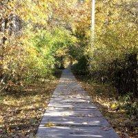 Осень :: Евгений Верзилин