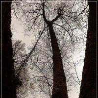 Лесов таинственная сень  С печальным шумом обнажалась. :: muh5257