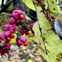 Плоды осеннего леса :: Ростислав