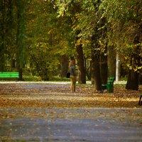 ... Осень, вновь напомнила душе о самом главном, ... :: barsuk lesnoi