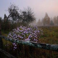 Туманное утро :: Лариса Савченко