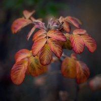 Осенние краски :: Владимир