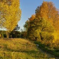 золотая осень :: Владимир Ефимов