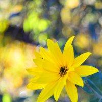 Виват, Золотая Осень! :: Тамара Бедай
