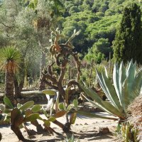 В тропическом саду :: Natalia Harries