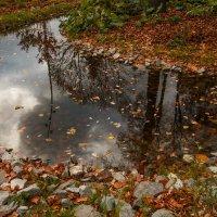 Октябрь прекрасен... :: Nyusha