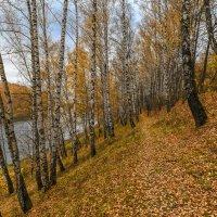 Уходящая осень :: Борис Устюжанин