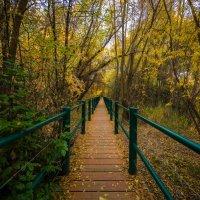 Осенний парк :: Iosif Magomedov