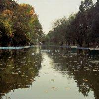 Задумчив в пасмурность осенний пруд :: Людмила